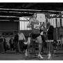 berlin-brandenburgische-hallenmeisterschaften-2009-3000m-lauf-m_bild-027.jpg